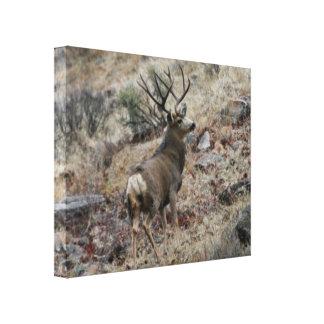 Mule deer photography 4 canvas print