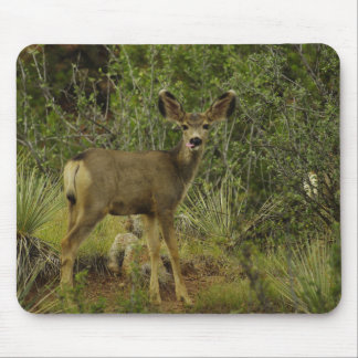 Mule Deer Raspberry Mouse Pad