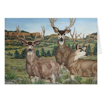 Mule Deer Wildlife Art Card