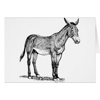 Mule Drawing, Stubborn Card