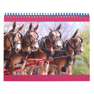 mules and donkeys wall calendars