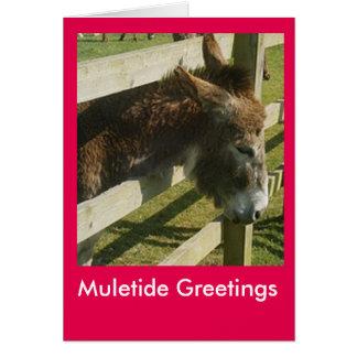Muletide Greetings Card
