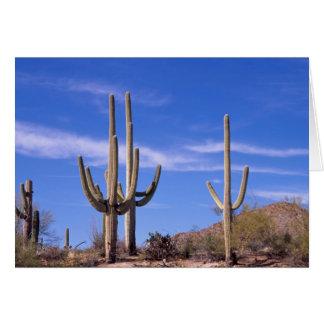 Multi armed Giant Saguaro cactus, Saguaro Card