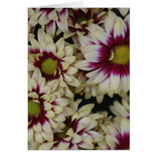 Multi color daisies card