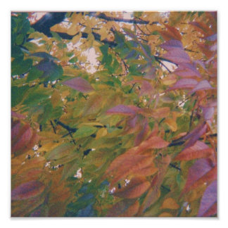 Multi-Colored Autumn Leaves Poster