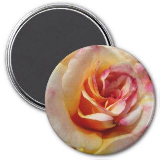 Multi-colored Rose Magnet