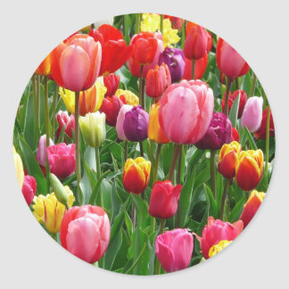 Multi-colored Tulips Classic Round Sticker