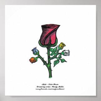 Multi - Colour Roses...Print... Poster
