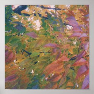 Multi-Coloured Autumn Leaves Poster