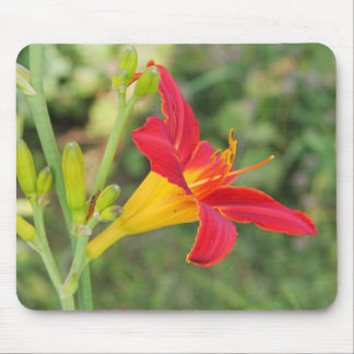 Multi-coloured lilly mouse pad