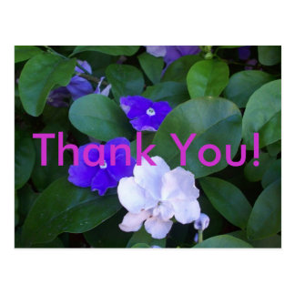Multi Petunias Thank You Postcard