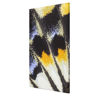 Multicolor butterfly wing pattern canvas print