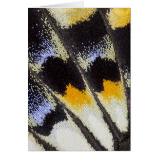 Multicolor butterfly wing pattern card