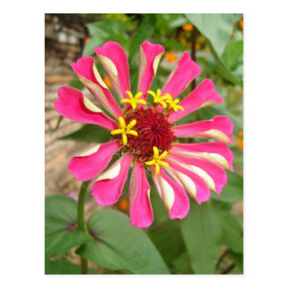 Multicolor Flower * Postcard