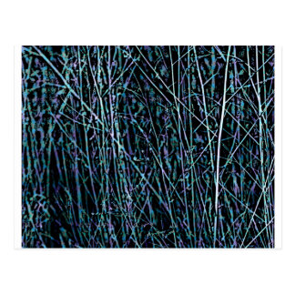 Multicolor Reeds in Blue and Purple Postcard