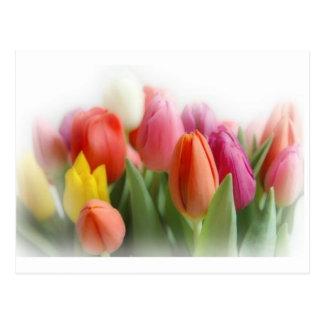 multicolor tulips postcard