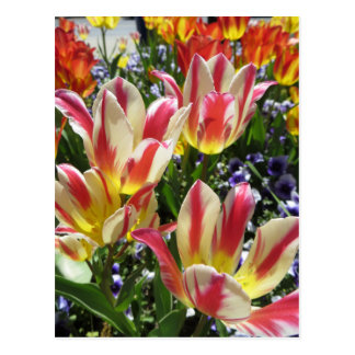 Multicolored Flowers Postcard
