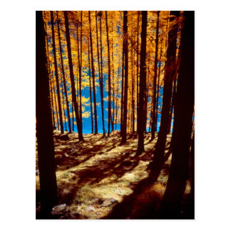 multicolored jaw forest in the autumn, postcard