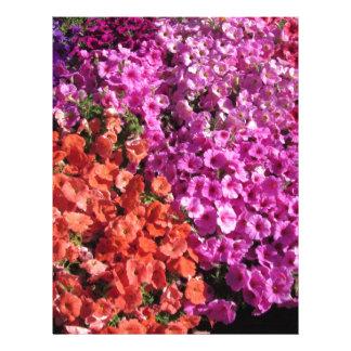Multicolored petunia flowers texture background letterhead