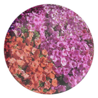 Multicolored petunia flowers texture background plate