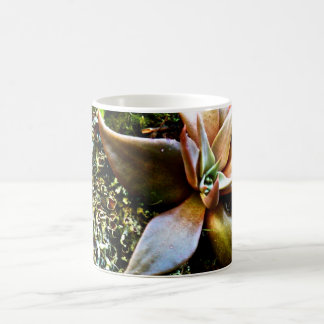 MULTICOLORED SUCCULENTS COFFEE MUG