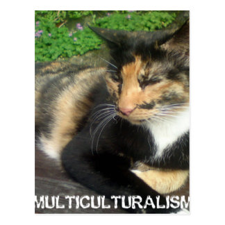 Multiculturalism Cat Postcard