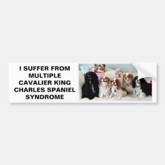 Multiple Cavalier King Charles Syndrome Bumper St Bumper Sticker