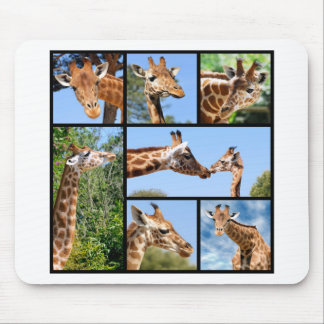 Multiple photos of giraffes mouse pad