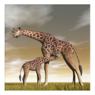 Mum and baby giraffe - 3D render Acrylic Wall Art