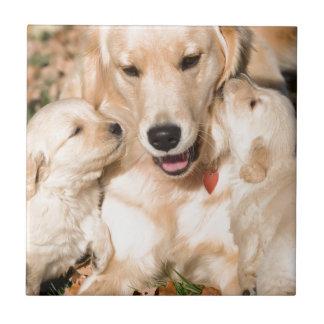 Mummy Dog and Puppies Ceramic Tiles