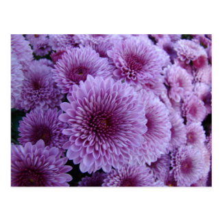Mums the word! postcard