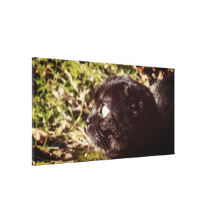Munchkin Cat Playing In The Sunlight Canvas Print