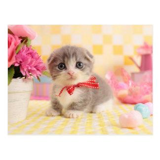 Munchkin Kitten Postcard