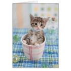 Munchkin Kitten With Pretty Ribbon Card