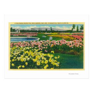 Municipal Rose Garden in Santa Clara County Postcard