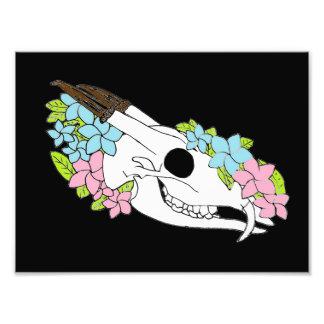 Muntjac Skull Photo Print