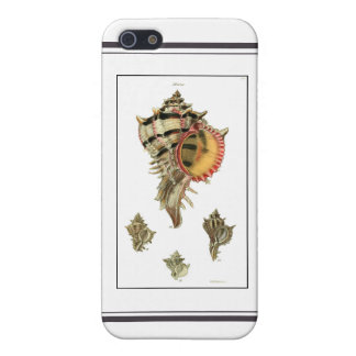 Murex sea shells vintage illustration iPhone 5/5S cover