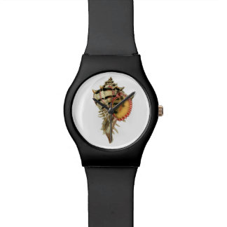 Murex sea shells vintage illustration watches