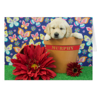 Murphy, week 5 photo card