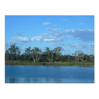 Murray River SA Postcard
