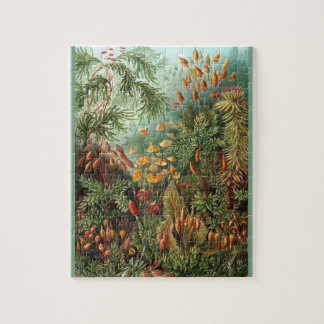 Muscinae - Ernst Haeckel 8x10 Jigsaw Puzzle