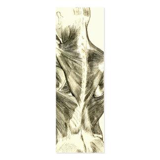 Muscles du dos vintages de l'anatomie | (circa carte de visite petit format