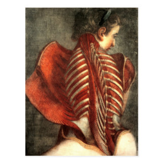 Muscles of the back in a female postcard