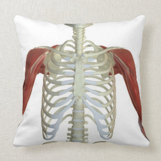 Muscles of the Shoulder 2 Pillows