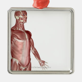 Muscles of the Upper Body 3 Silver-Colored Square Ornament