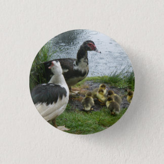 Muscovy Ducks And Ducklings Button