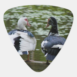 Muscovy Ducks Sitting On An Ornament Guitar Pick