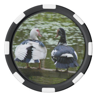 Muscovy Ducks Sitting On An Ornament Poker Chip