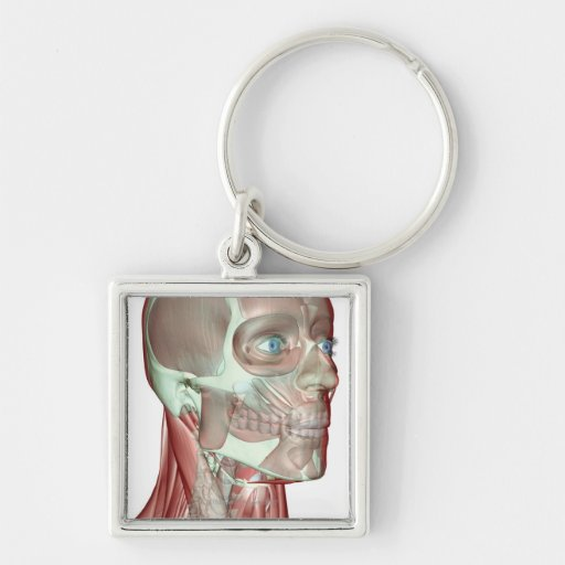 Musculoskeleton of the Head and Neck 5 Key Chains