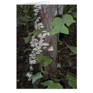 Mushroom4 Card